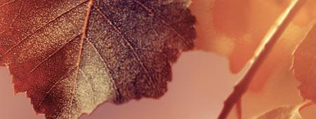 pelle secca